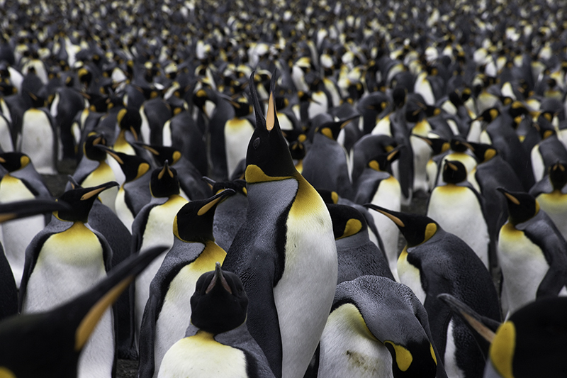 Icebergs, Water andPenguins